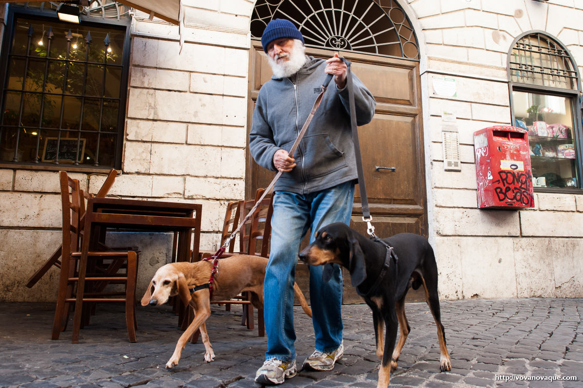 Dogs in Rome