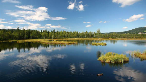 Sumava national park review
